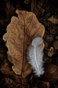 Autumn Leaf Photos - May To October by Odd Jeppesen