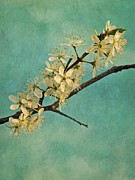 Shrub Metal Prints - Mayblossom Metal Print by Priska Wettstein