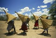 Baskets Photos - Mbukushu Women Return Home With Woven by Frans Lanting
