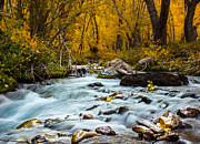 Jim Ross - McGee Creek Fall Splendor