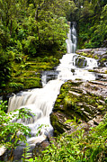 Rainforest Abstract Prints - McLean Falls in the Catlins Print by Ulrich Schade