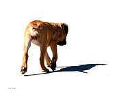 Dog Walking Digital Art Prints - Me and My Shadow Print by Dale   Ford