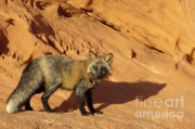 Canid Photos - Me and My Shadow by Sandra Bronstein