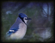 Bluejay Metal Prints - Me Minus You - Blue Metal Print by Evelina Kremsdorf