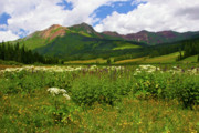 Thrive Prints - Meadow and Mountains Print by Crystal Garner