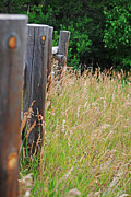 Sheryl Cox - Meadow Fence Line