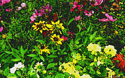 Peri Craig Art - Meadow Floral by Peri Craig