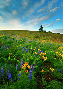 Hillside Art - Meadow Gold by Mike  Dawson
