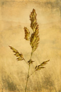 Isolated Digital Art Prints - Meadow Grass Print by John Edwards