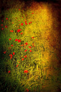 Textured Floral Framed Prints - Meadow Framed Print by Svetlana Sewell