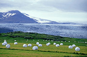 Bale Metal Prints - Meadow with hay bales and glaciers near Jokulsarlon Lagoon in Iceland Metal Print by Sami Sarkis