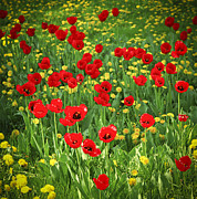 Spring Beauty Posters - Meadow with tulips Poster by Elena Elisseeva