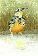 Meadowlark Paintings - Meadowlard in Field by Elise Boam