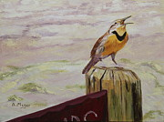 Meadowlark Originals - Meadowlark by Alan Mager