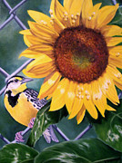 Meadowlark Paintings - Meadowlark and Sunflower by Donna Francis