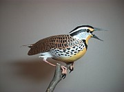 Meadowlark Sculpture Framed Prints - Meadowlark Framed Print by Monte Burzynski