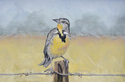 Meadowlark Pastels - Meadowlark on Fence by Kathryn Yoder