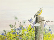 Barbed Wire Paintings - Meadowlark by Steve Mountz