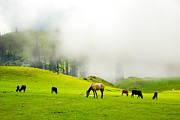 Lush Green Framed Prints - Meadows of Heaven Framed Print by Syed Aqueel