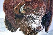 Bison Originals - Meager Fare by Susan Moyer