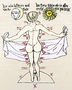 Labelled Posters - Medical Zodiac, 15th Century Diagram Poster by Sheila Terry