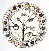 Diagnostics Prints - Medieval Urine Wheel Print by Sheila Terry