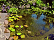 Hawaiian Pond Prints - Meditation Pond in Waimea Print by Bette Phelan