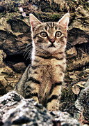Pavement Prints - Mediterranean Wild Babe Cat Print by Stylianos Kleanthous