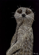 Animal Mixed Media Metal Prints - Meerkat on Watch Metal Print by Linda Hiller