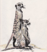 Meerkat Drawings - Meerkats by Marqueta Graham