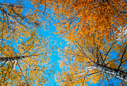 Golden Leaves.beauty Prints - Meet in Heaven. Autumn Glory Print by Jenny Rainbow