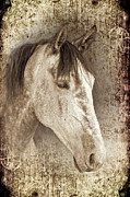 Horse Portrait Framed Prints - Meet The Andalucian Framed Print by Meirion Matthias