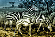 Zebra Digital Art - Meet the Zebras by Bill Cannon