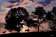 Deer Photo Originals - Meeting In The Sunset by Bill Stephens