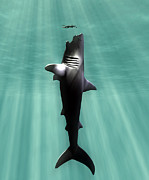 Comparing Posters - Megalodon Prehistoric Shark With Human Poster by Christian Darkin