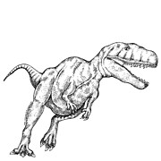 T Rex Drawings - Megalosaurus by Karl Addison