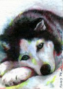 Husky Drawings Metal Prints - Melancholy Baby Metal Print by Melissa J Szymanski