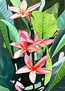Plumeria Paintings - Melia by Marionette Taboniar