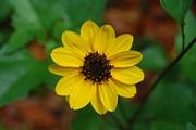 Judy Hall-Folde - Mellow Yellow