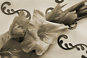Gladiolus Photos - Melody of Gladiolus. by Terence Davis