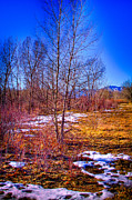 Snow Prints - Melting Snow in South Platte Park Print by David Patterson