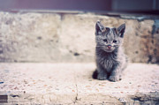 Sitting Photos - Melts Your Heart by Happykiddo Photography
