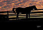 Photo-realism Photos - Memorial Day Weekend Sunset in Georgia - Horse - Artist Cris Hayes by Cris Hayes