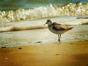 Gull Metal Prints - Memories of Summer Metal Print by Amy Tyler