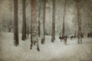 Photomanipulation Photo Prints - Memories of the Trees Print by Reflective Moments  Photography and Digital Art Images