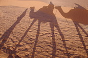 Camel Photos - Men and camels shadows on sand dune by Sami Sarkis