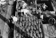 Watermelons Photos - Men Work To Load A Ship Taking by Edwin L. Wisherd