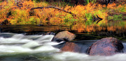 Merced River Autumn Print by Floyd Hopper