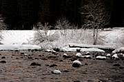 High Sierra Metal Prints - Merced River in Winter Metal Print by Lee Chon