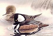 Ducks Paintings - Mergansers by Cherry Woodbury